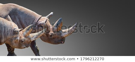 Stock photo: Two ecological banners with space for text.