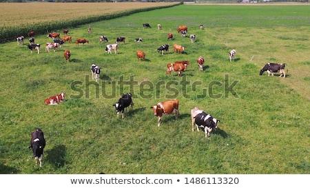 aerial view of countryside landscape from drone pov stock photo © stevanovicigor