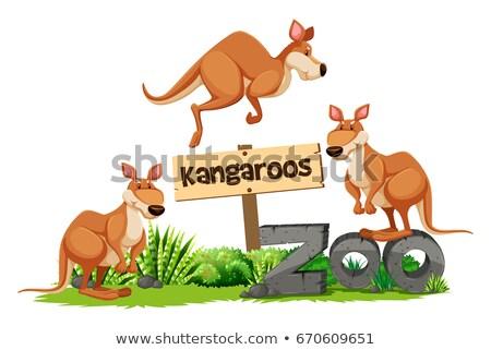 Három állatkert felirat illusztráció természet háttér Stock fotó © bluering
