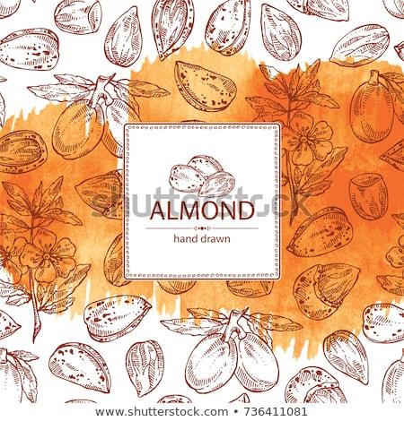 Сток-фото: Watercolor Illustrations Of Almond Nut