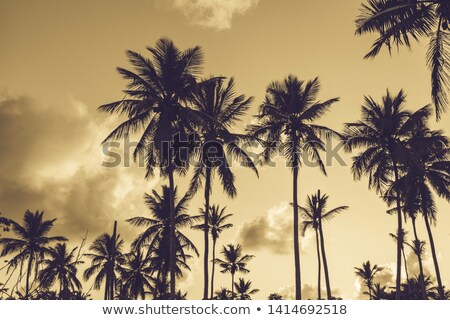 tree shade and dramatic sunset stock photo © annaomelchenko