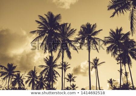 tree shade and dramatic sunset stock photo © anna_om