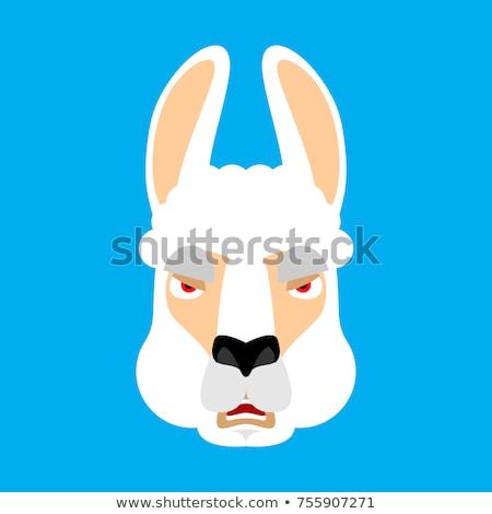Lama Alpaca angry face avatar. Animal evil emoji. Vector illustr Stock photo © popaukropa