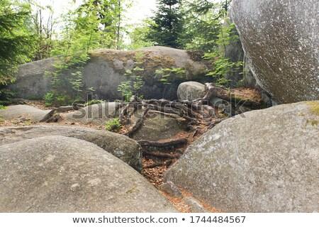 базальт дерево корней колонн пейзаж рок Сток-фото © romvo