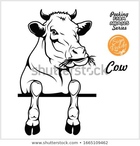 Stock photo: Cartoon Buffalo Peeking