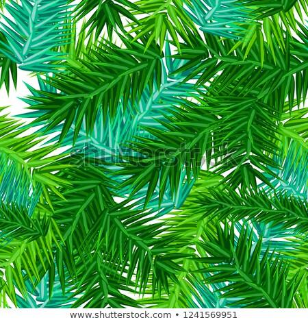 Zöld nedvdús fenyő ágak végtelen minta fehér Stock fotó © orensila