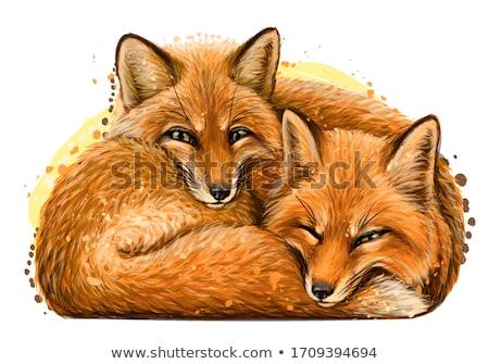 Cartoon gelukkig vos welp illustratie baby Stockfoto © cthoman