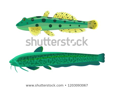 Wels Catfish Green Fish Set Vector Illustration Stock photo © robuart