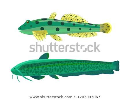 akvárium · trópusi · hal · szett · különböző · piros · zebra - stock fotó © robuart