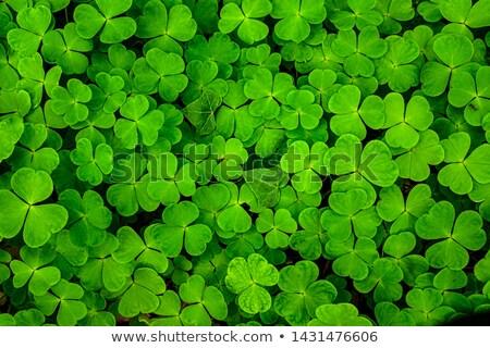 verde · monedas · de · oro · fiesta · cerveza · oro - foto stock © grafvision