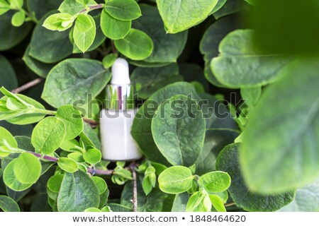 Face cream, serum, lotion, moisturizer and face oil among white  Stock photo © dashapetrenko