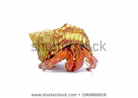 Cangrejo ilustración feliz mar subacuático solo Foto stock © colematt