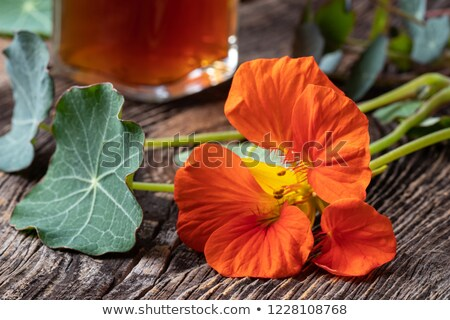 Fresh nasturtium flower with a bottle of tincture in the background Stock photo © madeleine_steinbach