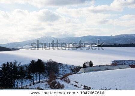 land · huizen · bos · heuvels · winter · Japan - stockfoto © dolgachov