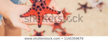 rouge · starfish · mains · mer · main · poissons - photo stock © galitskaya