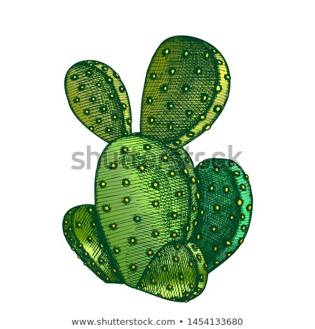 Color pera cactus tinta vector decorativo Foto stock © pikepicture