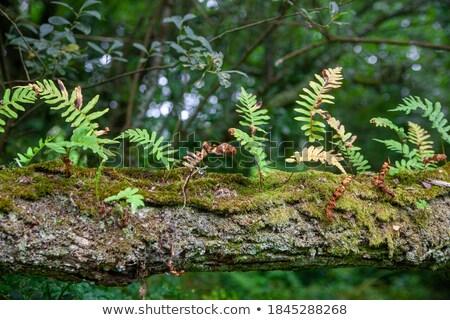 Corteza detalle fotograma completo fondo planta macro Foto stock © prill
