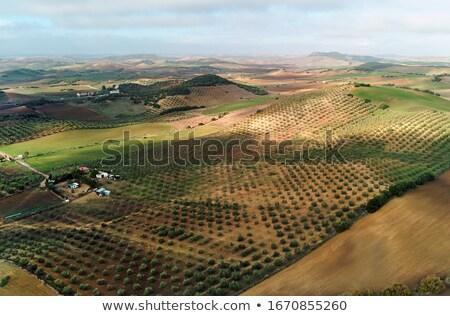 Antenne fotografie agrarisch velden Spanje afbeelding Stockfoto © amok