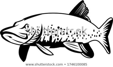 északi úszik retro feketefehér retró stílus illusztráció Stock fotó © patrimonio