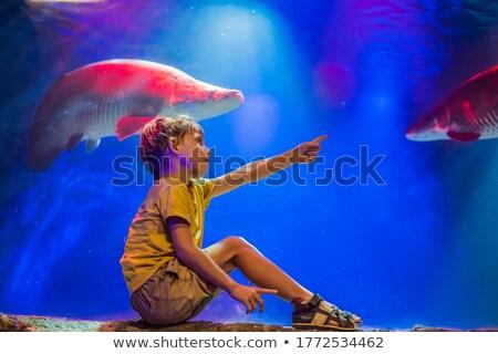 Desfrutar ver aquário água bebê Foto stock © galitskaya