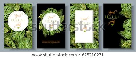 Afişler ayarlamak örnek vektör soyut yaprak Stok fotoğraf © yo-yo-