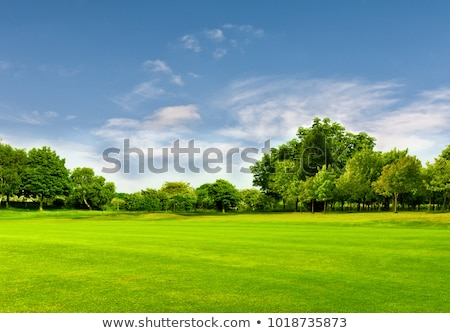 spring meadow detail with blue sky Stock photo © prill
