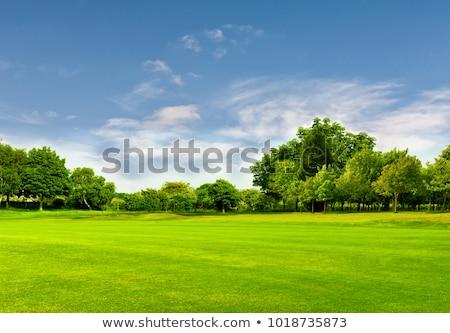 весны луговой подробность Blue Sky Сток-фото © prill
