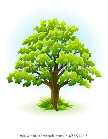 single oak tree with green leafage stock photo © LoopAll