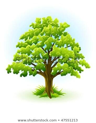 single oak tree with green leafage stock photo © LoopAll