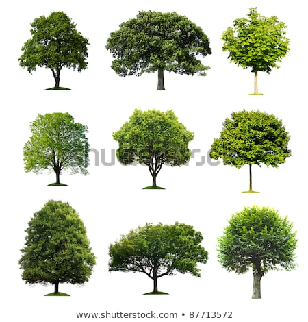 collection tree isolated on white background stock photo © archipoch
