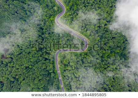 Stock photo: Green and beautfiul forest