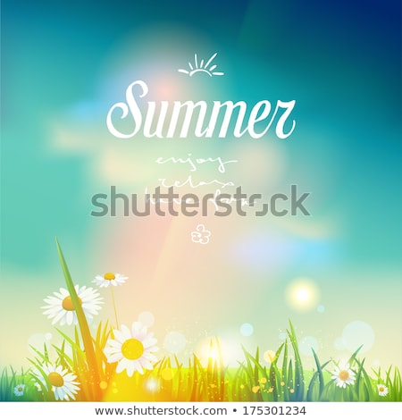 Art summer background. sunrise on the meadow Stock photo © Konstanttin