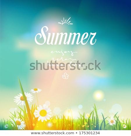 art summer background sunrise on the meadow stock photo © konstanttin