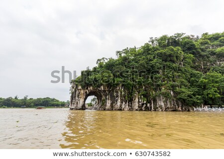 Tree formation on a hill Stock photo © 3523studio
