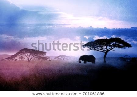 Elefante africano savana chiaro di luna african illustrazione elefante Foto d'archivio © ajlber