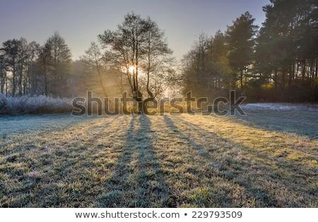 Hideg fagyos reggel köd köd égbolt Stock fotó © chris2766
