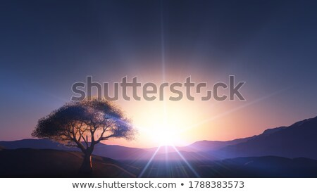 Lone Tree and the sun Stock photo © Kotenko
