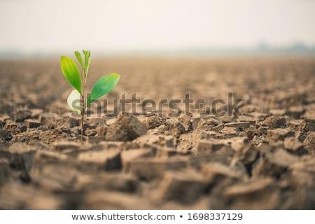 Usine croissant sécher fissuré sol semis Photo stock © Rob300