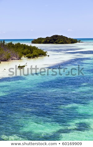 beautiful scenic beaches and clear water in the Keys with palmes Stock photo © meinzahn