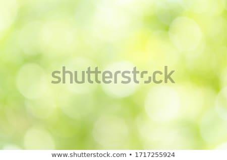 ストックフォト: 緑 · ぼけ味 · 抽象的な · ぼやけた · ライト · 光