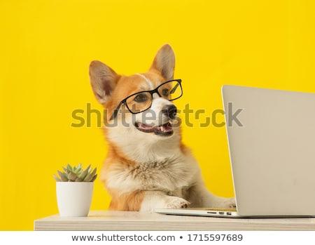 небольшой ноутбука собака такса из экране Сток-фото © Mikko