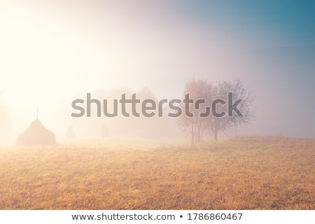 Autumn landscape with fog Stock photo © ondrej83