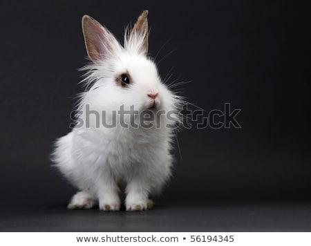 детей · кролик · ушки · портрет · мальчика · девушки - Сток-фото © thomaseder