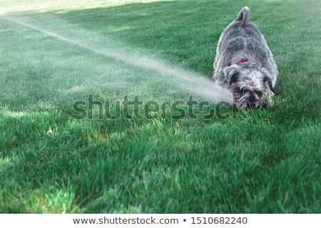 sproeier · water · gazon · mensen · lopen · verleden - stockfoto © taviphoto