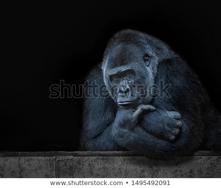 Gezicht gorilla gras warm zomer Stockfoto © c-foto