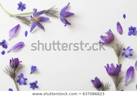 violet flower detail stock photo © jonnysek