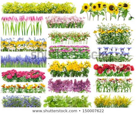 花壇 夏の花 花 緑 青 ストックフォト © manfredxy
