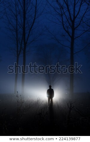 awesome silhouette misty forest at dawn Stock photo © Geribody