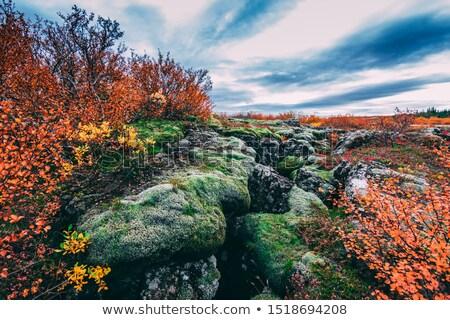 Manzaralı görmek ünlü İzlanda su çim Stok fotoğraf © 1Tomm
