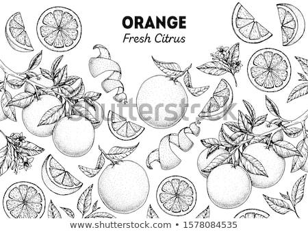 Citrus Collection Stock photo © zhekos